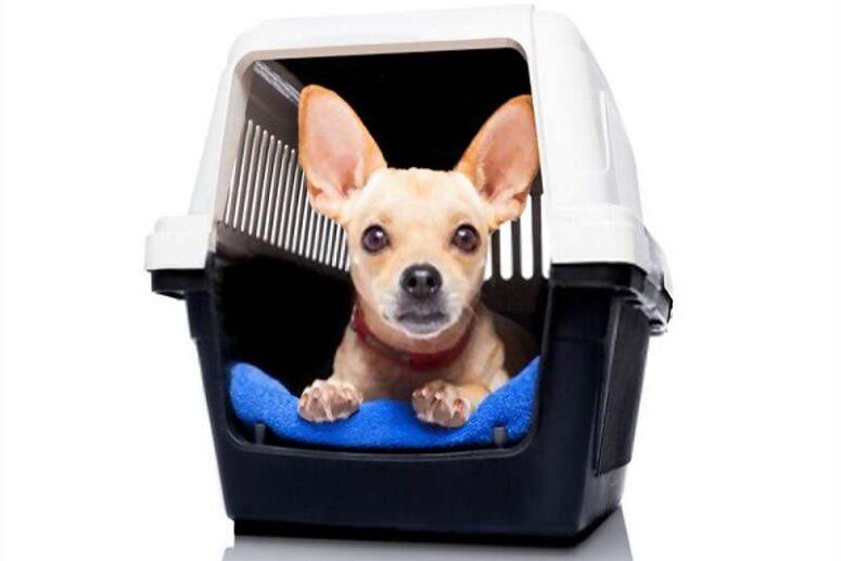 Pet Shipping Company in Dubai